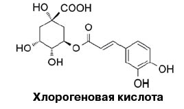 s20151036 ask coffee2 chlorogen.jpg